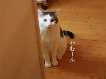 080403_むむん.jpg