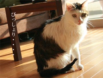 080621_びっしょり2.jpg