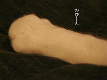 090118_のびん.jpg