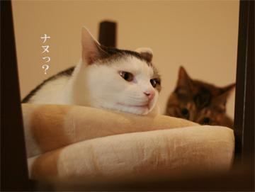 090205_なぬ.jpg